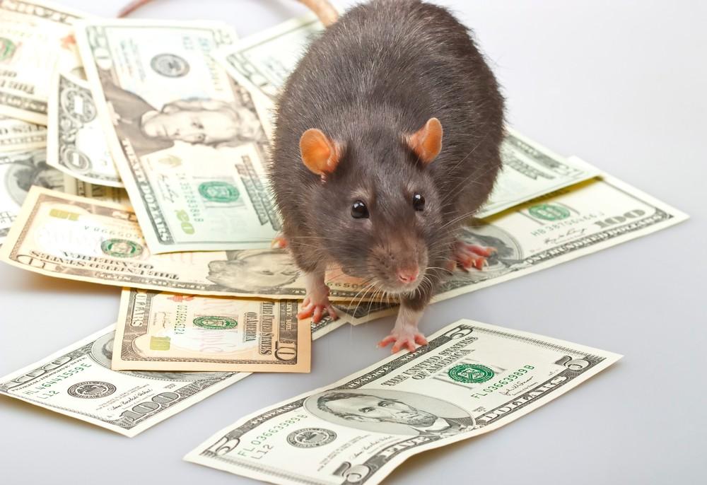 amagundwane rats